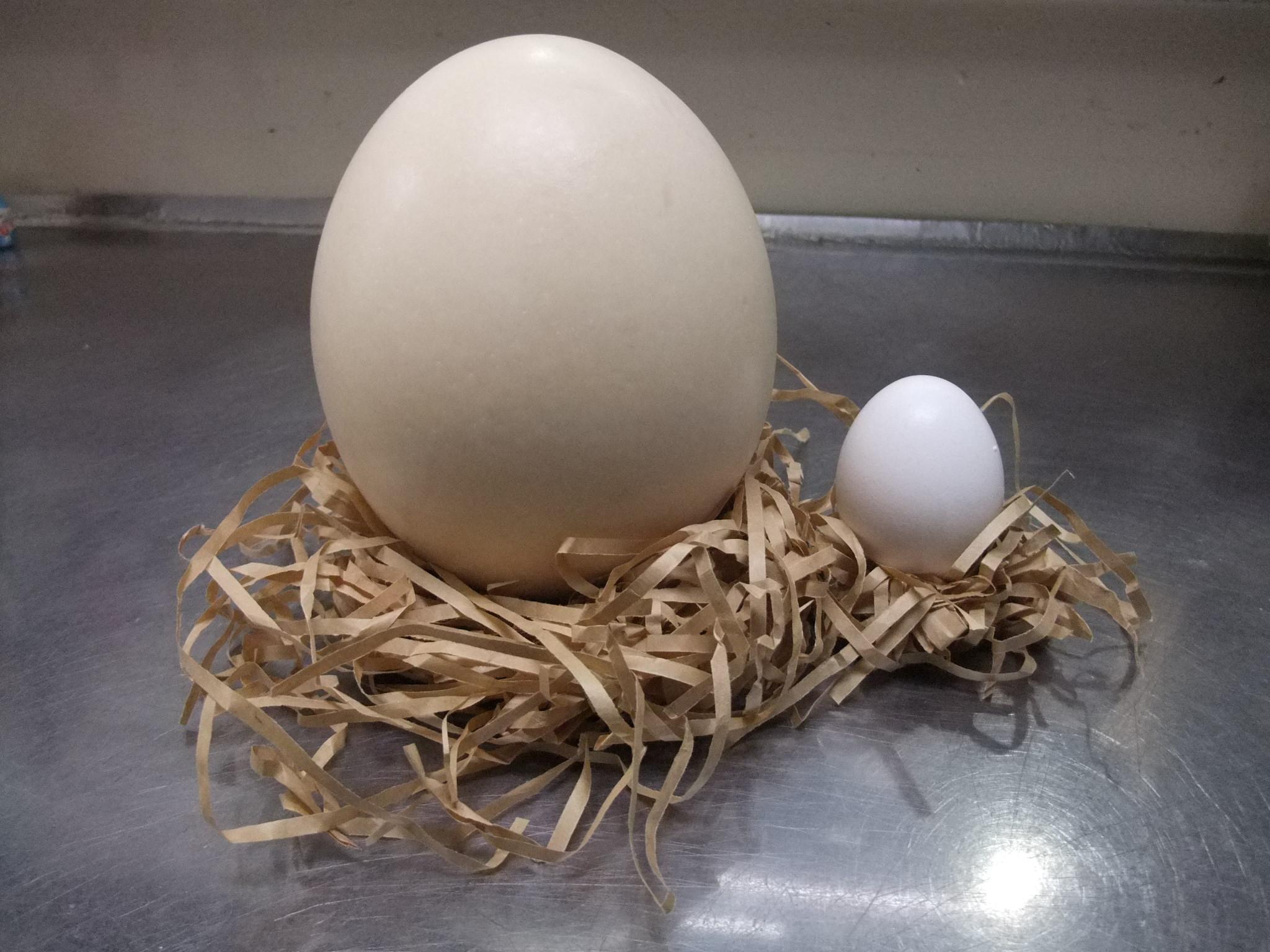 ダチョウの卵でプリンを作ってみました!